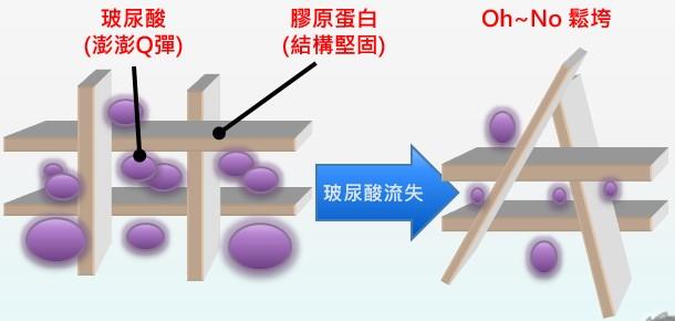 玻尿酸的隔間作用使皮膚澎嫩Q彈